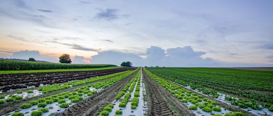 Lo que el Brexit podría hacerle a los cultivos