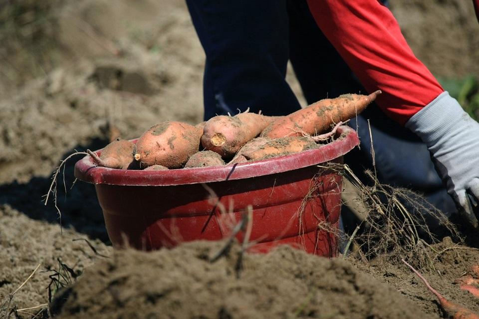 Abogan por la creación de un Fondo de Tierras en Castilla y León
