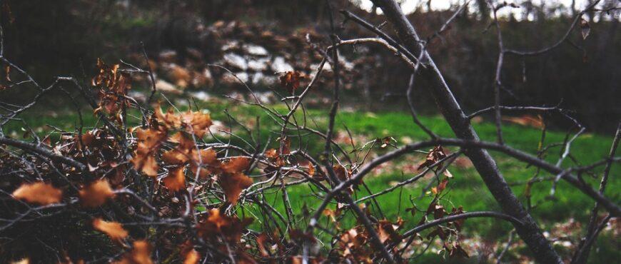 Lo que debes saber sobre la Xylella Fastidiosa