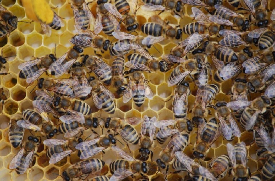 Las colmenas de abejas se ven amenazadas por estos químicos