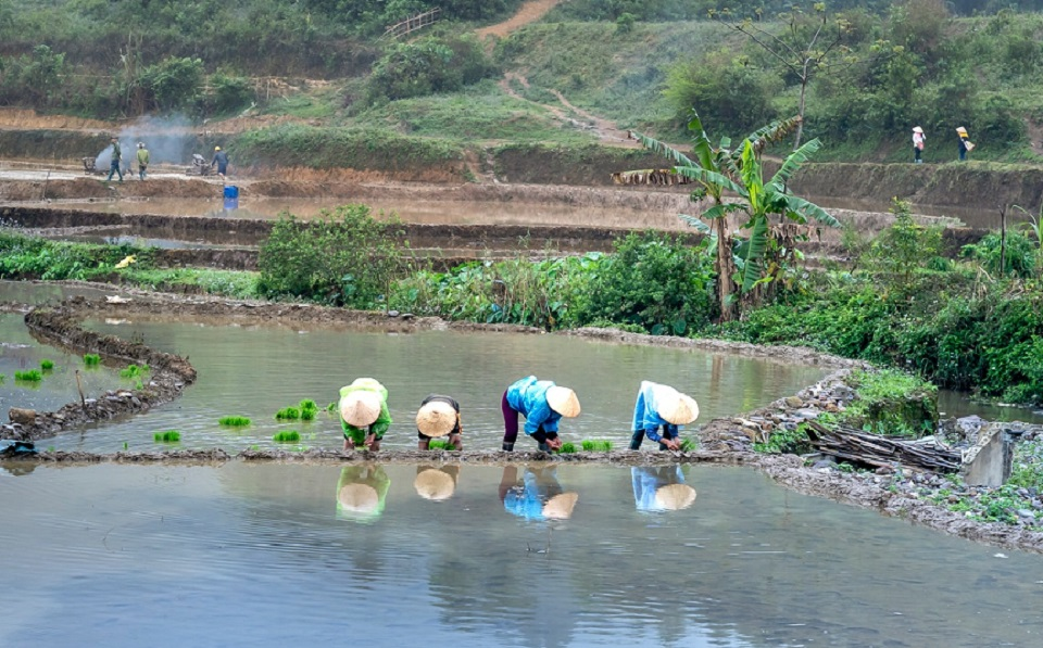 Lluvias ponen en riesgo al sector hortofrutícola