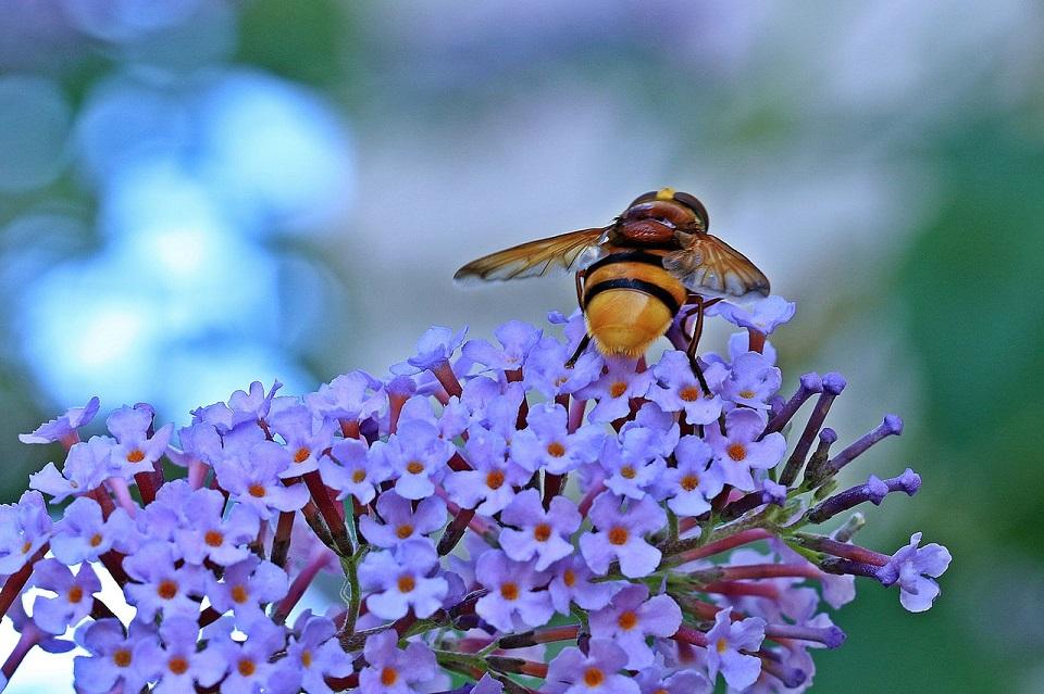 Investigan impacto de pesticidas en abejas