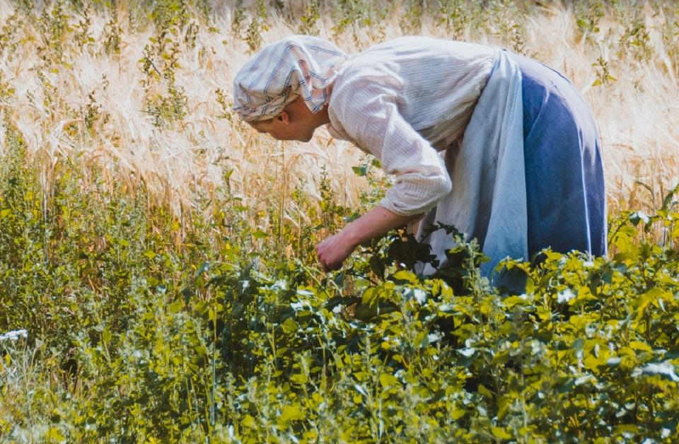 Respaldan emprendimientos de mujeres en el campo