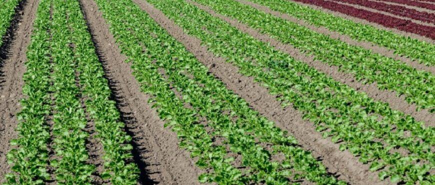 Nuevo pesticidas para cultivos
