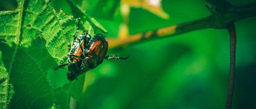 Cambio climático prolifera las plagas que atacan los cultivos