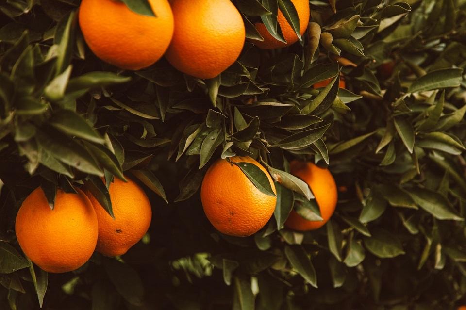 Mandarinas valencianas se dejan de vender