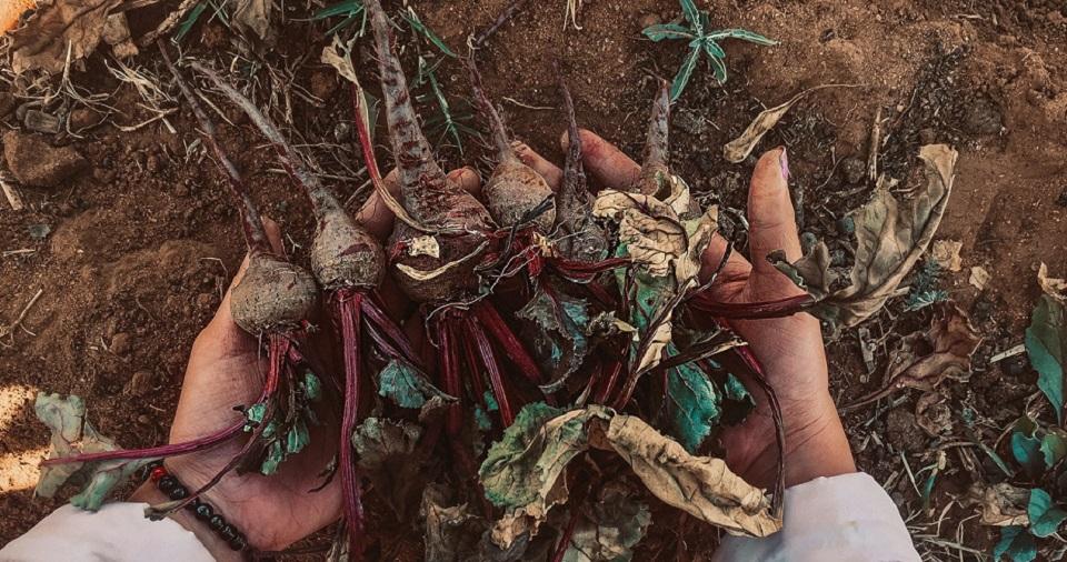 Layers para vigilar cultivos de remolacha