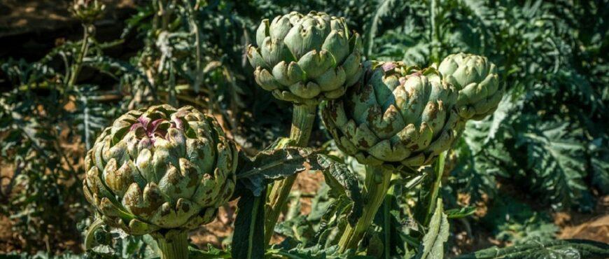 Efectos de las lluvias en los cultivos