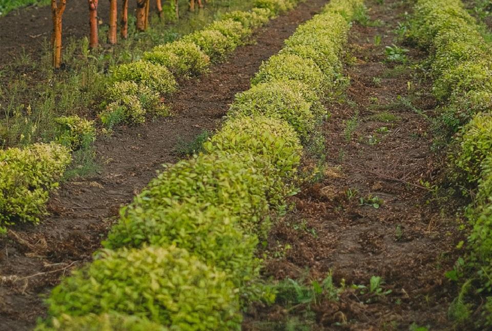 Uso de fertilizantes se regiría por un nuevo reglamento