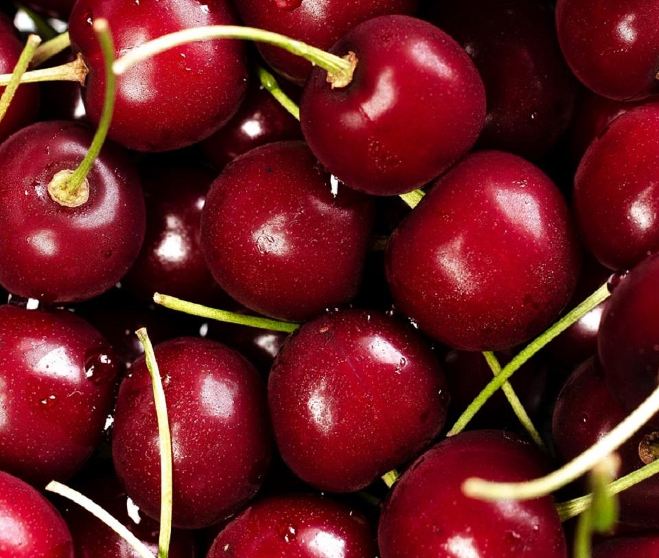 Agricultores quieren apoyo para aumentar el cultivo de cereza