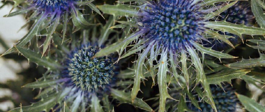 inteligencia artificial predice plantas en riesgo de desaparacer