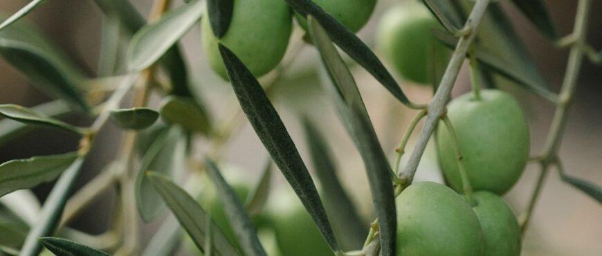 Propuestas para etiqueta nutriscore al aceite de oliva