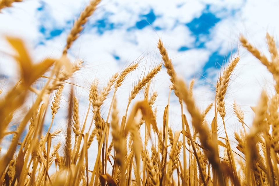 Tierra para siembra de cereales baja