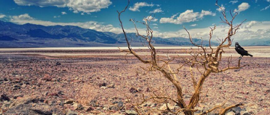 Primavera con calor y sequía