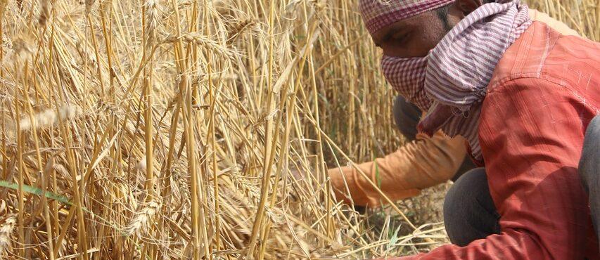 Beneficios para empresas agrarias que ofrezcan contratos fijos