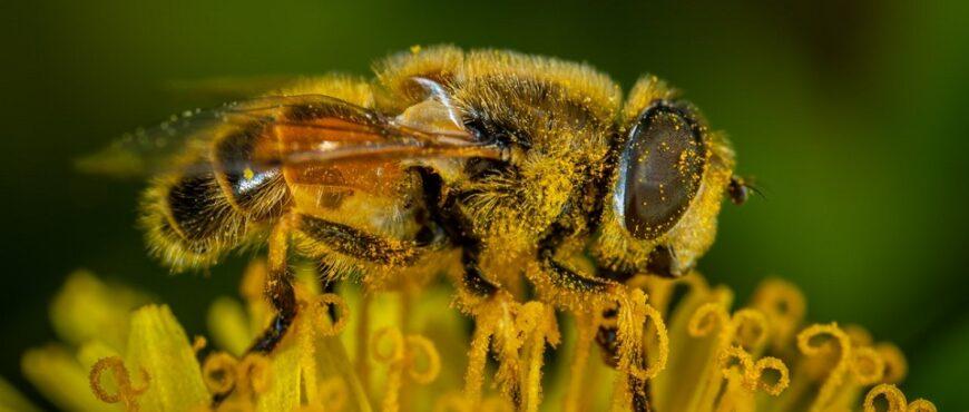 Acciones para frenar la reducción de las abejas