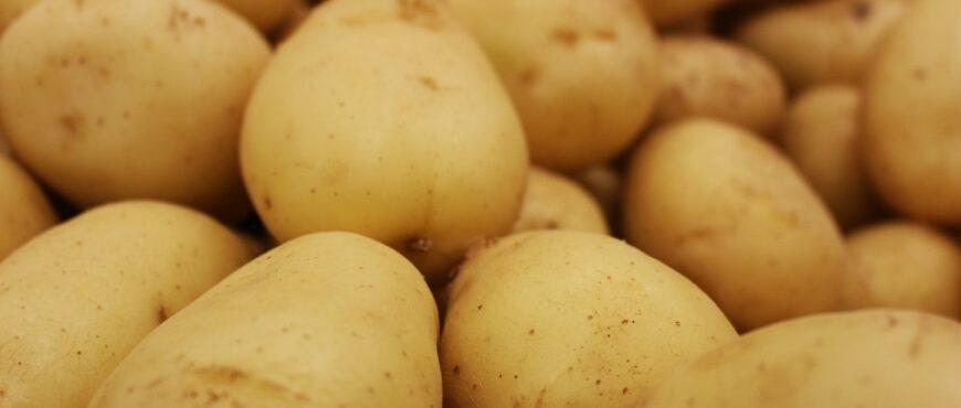 Pronostican un aumento en el cultivo de patatas
