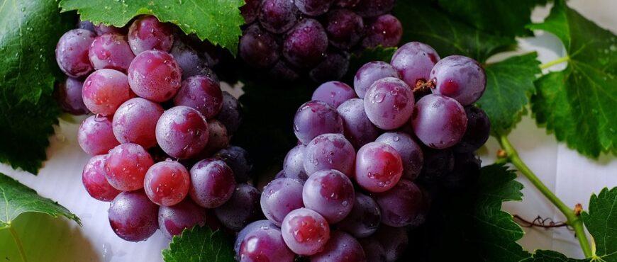 Compraventa de uva para vino se regirá por un contrato
