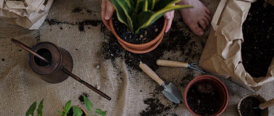 Promueven el cultivo en azoteas